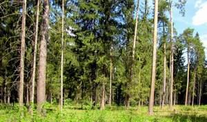 Россияне смогут узаконить свои лесные участки